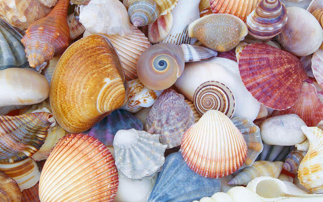 conchas-de-mar-portada